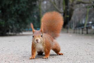 Eichhörnchen Düsseldorf Hofgarten (Squirrils) by Flickr user -Marlith-